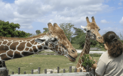 What to see and Do at the Miami Metro Zoo